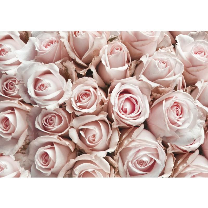 Vlies Fototapete no. 189 | Blumen Tapete Blumen Rose Blüten Natur ...