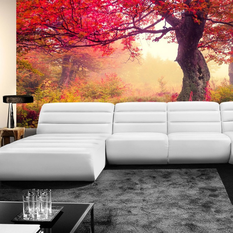 vlies fototapete no 258 wald tapete b ume herbst. Black Bedroom Furniture Sets. Home Design Ideas