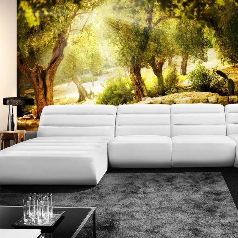 vlies fototapete no 265 wald tapete sonne steine. Black Bedroom Furniture Sets. Home Design Ideas