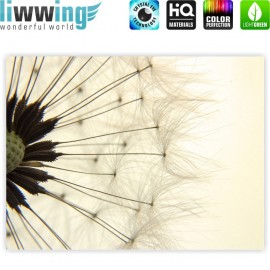 "liwwing (R) Marken Leinwandbild ""no. 204"" | classic (4:3) | Pusteblume Löwenzahn Natur Beige"