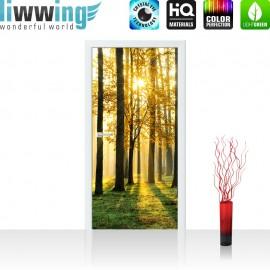 "Tür Fototapete ""Sunlight Forest II"" | 100x211 cm | Wald Bäume Sonnenstrahlen grün Ruhe | liwwing (R)"