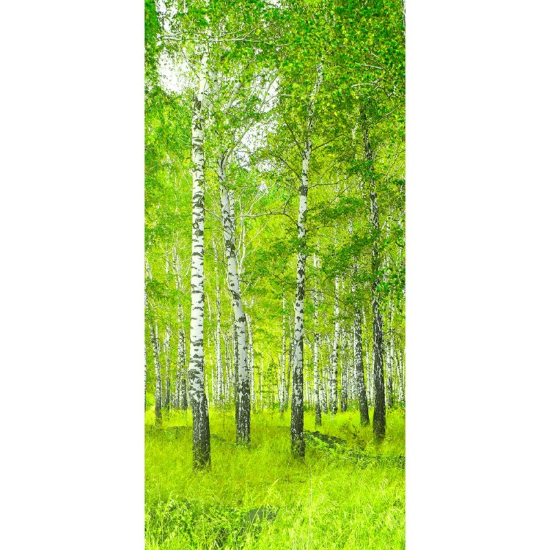 t r fototapete sunny birch forest 100x211 cm. Black Bedroom Furniture Sets. Home Design Ideas