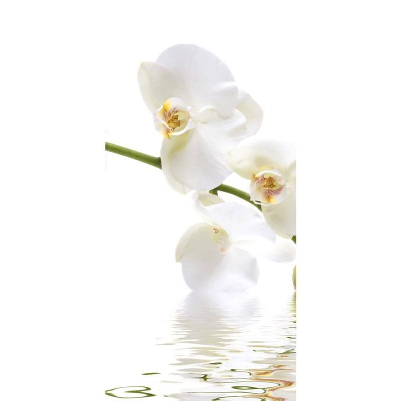 t r fototapete no 201 100x211 cm orchidee blumen blumenranke wei natur pflanzen abstrakt. Black Bedroom Furniture Sets. Home Design Ideas