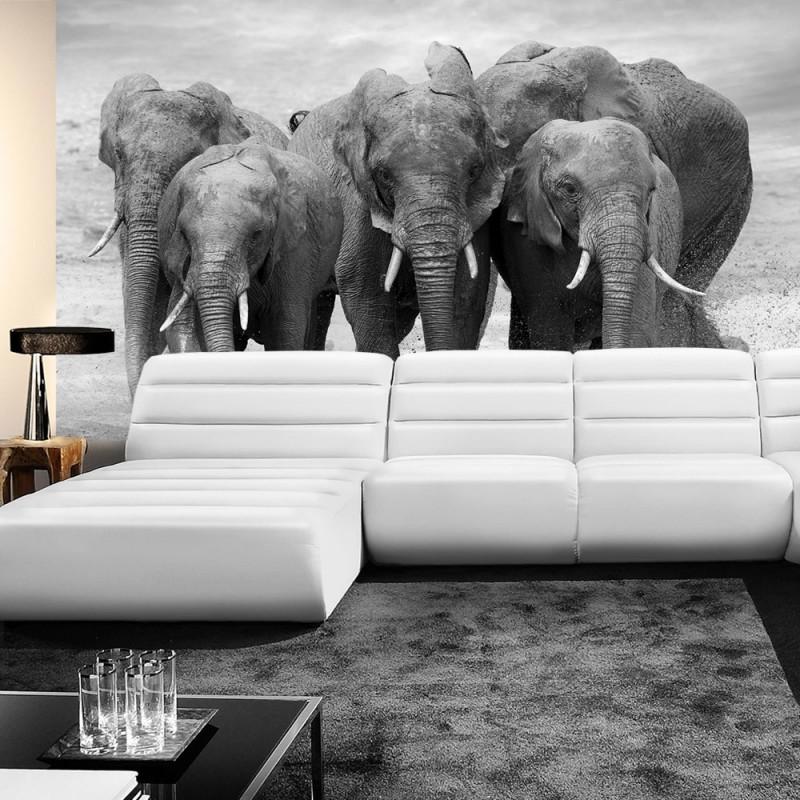 vlies fototapete no 4578 natur tapete tier elefant afrika natur herde schwarz wei. Black Bedroom Furniture Sets. Home Design Ideas