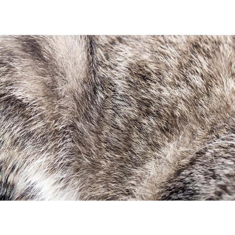 Fell Tapete fototapete no 4327 natur tapete fell tier haare grau braun