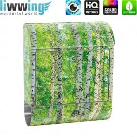Design XXL Edelstahlbriefkasten mit Wandbefestigung & Zeitungsrolle   Birkenwald Bäume Wald Sonne Birke Natur Baum   no. 0007