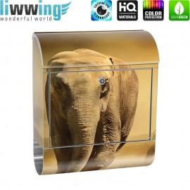 Design XXL Edelstahlbriefkasten mit Wandbefestigung & Zeitungsrolle   Afrika Savanne Elefanten Gras Landschaft   no. 0011