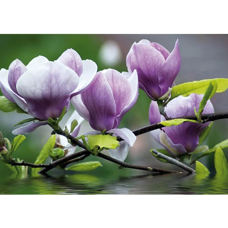 vlies fototapete no 439 orchideen tapete blume wasser pflanze orchidee lila. Black Bedroom Furniture Sets. Home Design Ideas