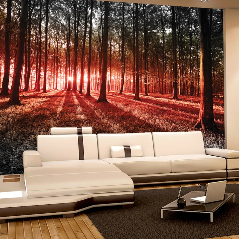 vlies fototapete no 640 wald tapete sonnenuntergang. Black Bedroom Furniture Sets. Home Design Ideas