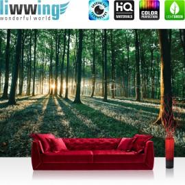 "Vlies Fototapete ""no. 641"" | Wald Tapete Sonnenuntergang Wald Bäume Wiese grün"
