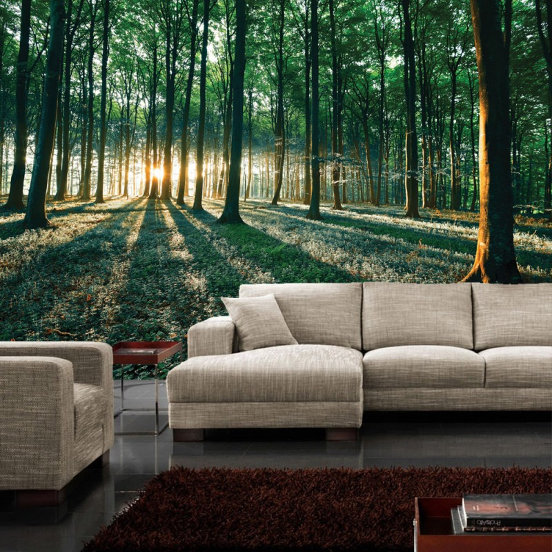 vlies fototapete no 641 wald tapete sonnenuntergang. Black Bedroom Furniture Sets. Home Design Ideas