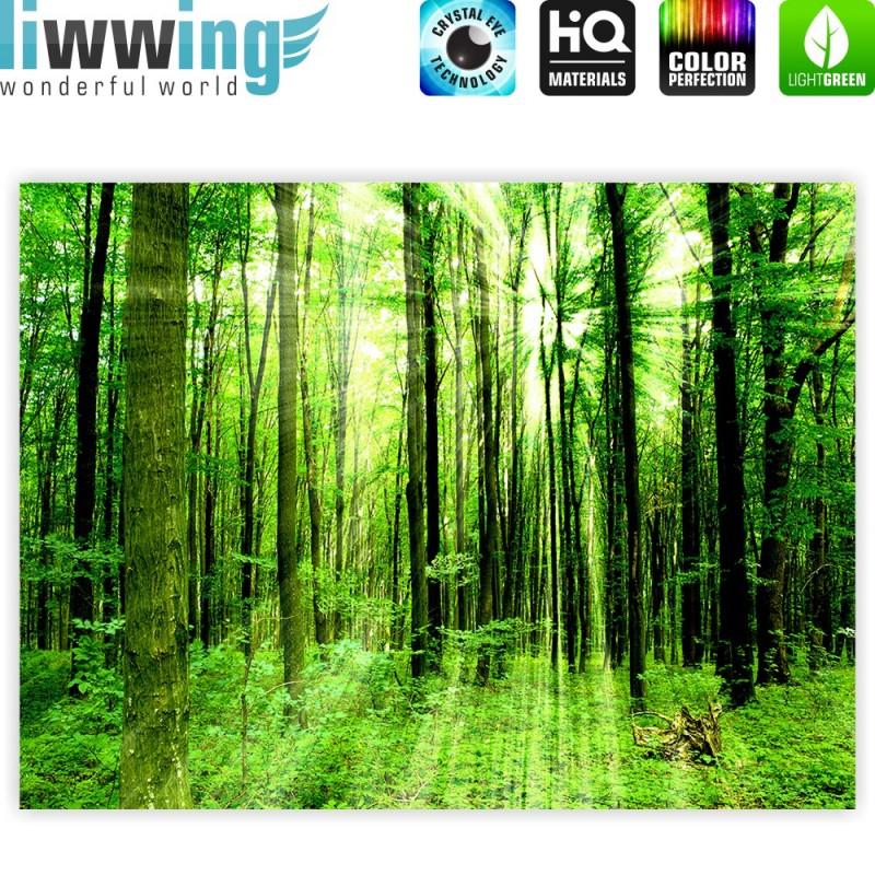 liwwing r marken leinwandbild sunlight forest. Black Bedroom Furniture Sets. Home Design Ideas