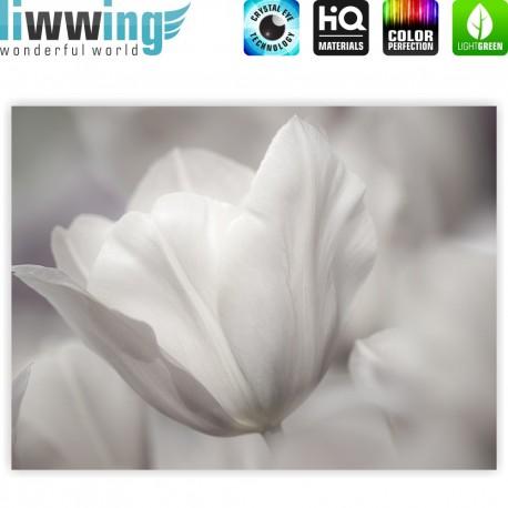 "liwwing (R) Marken Leinwandbild ""White Tulips "" | Classic (4:3) | Tulpen Blumen Blumenranke weiß grau Natur Pflanze"