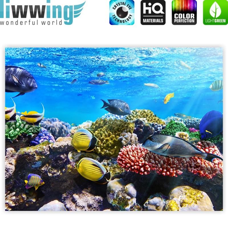 Liwwing r marken leinwandbild underwater reef for Fische aquarium