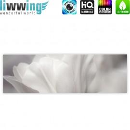 "liwwing (R) Marken Leinwandbild ""White Tulips "" | Panorama | Tulpen Blumen Blumenranke weiß grau Natur Pflanze"