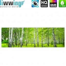 "liwwing (R) Marken Leinwandbild ""Sunny Birch Forest"" | Panorama | Birkenwald Bäume Wald Sonne Birke Gras Natur Baum"