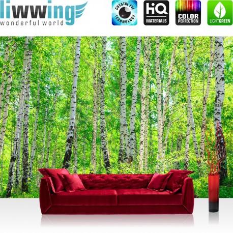 PREMIUM Fototapete - no. 7   Birch Forest   Birkenwald Bäume Wald Sonne Birken Gras Natur Baum