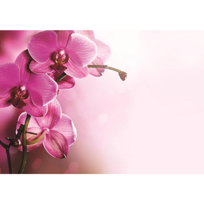 Vlies fototapete no 1809 vliestapete liwwing r orchideen 1809 orchideen tapete orchidee blumen wellness lila liwwing thecheapjerseys Choice Image