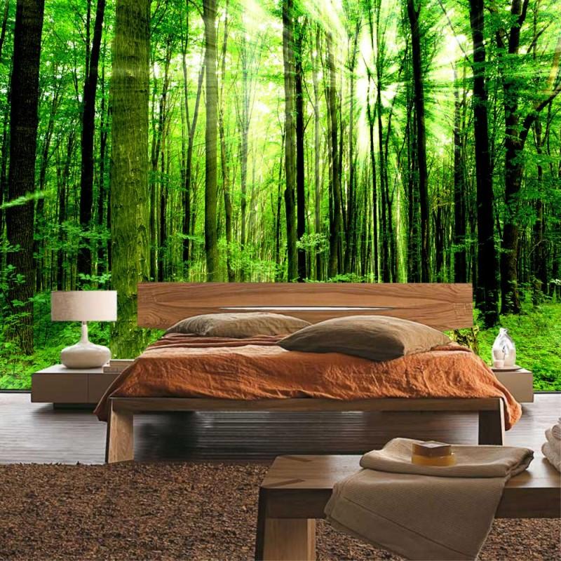 vlies fototapete sunlight forest wald tapete b ume. Black Bedroom Furniture Sets. Home Design Ideas