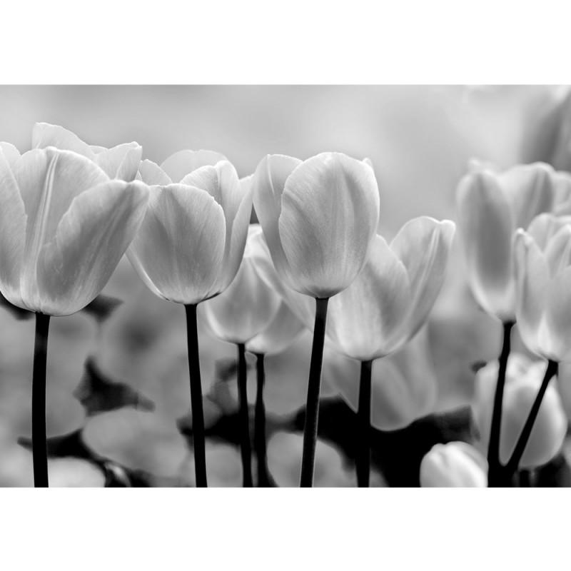 Vlies Fototapete no. 1878 | Vliestapete liwwing (R) Blumen Tapete ...
