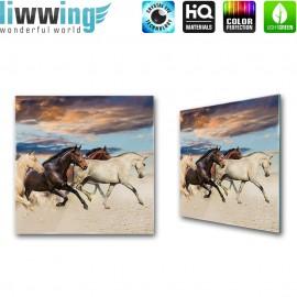 Glasbild ''no. 2141'' | Tiere Glasbild Pferd Strand Himmel braun | liwwing (R)