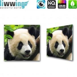 Glasbild ''no. 0986'' | Tiere Glasbild Pandabär Bär Panda grün | liwwing (R)