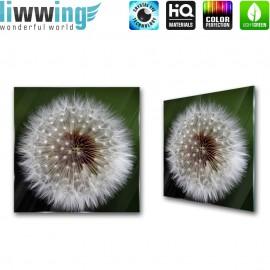 Glasbild ''no. 2237''   Pflanzen Glasbild Pusteblume Fasern Blume anthrazit   liwwing (R)
