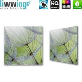 Glasbild ''no. 0829''   Blumen Glasbild Pusteblume Pflanze Natur grün   liwwing (R)