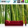 PREMIUM Fototapete - no. 75 | Paradies of Bamboo | Bambus Wald Bambuswald Dschungel Natur Bäume