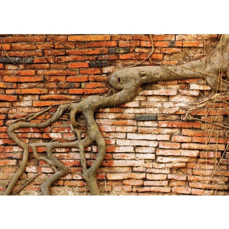 Tapete Rustikal vlies fototapete no 3289 vliestapete liwwing r steinwand