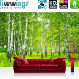 PREMIUM Fototapete - no. 112 | Sunny Birch Forest | Birkenwald Bäume Wald Sonne Birke Gras Natur Baum