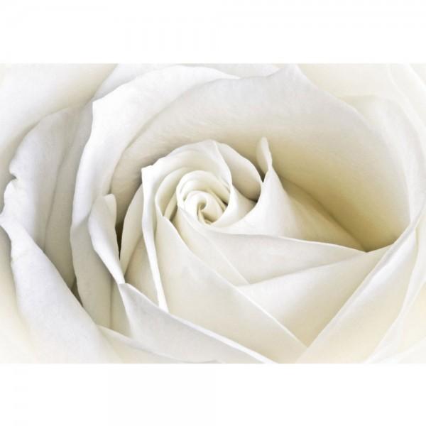 Fototapete Blumen Tapete Rose Blumen Blüte weiß edel weiß | no. 1099
