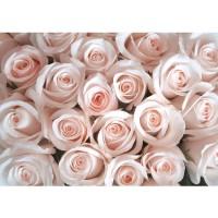Fototapete Blumen Tapete Blumen Rose Blüten Natur Liebe Love Blüte Rosa rosa | no. 185