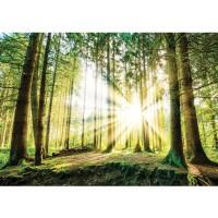 Fototapete Wald Tapete Nadelwald, Sonnenaufgang, Sonnenstrahlen grün | no. 3256