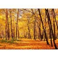 Fototapete Autumn Forest Wald Tapete Herbstblätter Wald Bäume Baum Forest Herbst orange | no. 84