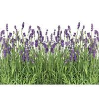 Fototapete Natur Tapete Lavendel Pflanze Wiese Blüten grün | no. 612