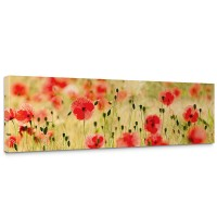 Leinwandbild Dream of Poopies Romantik Mohn Feld Blumen Gras | no. 70