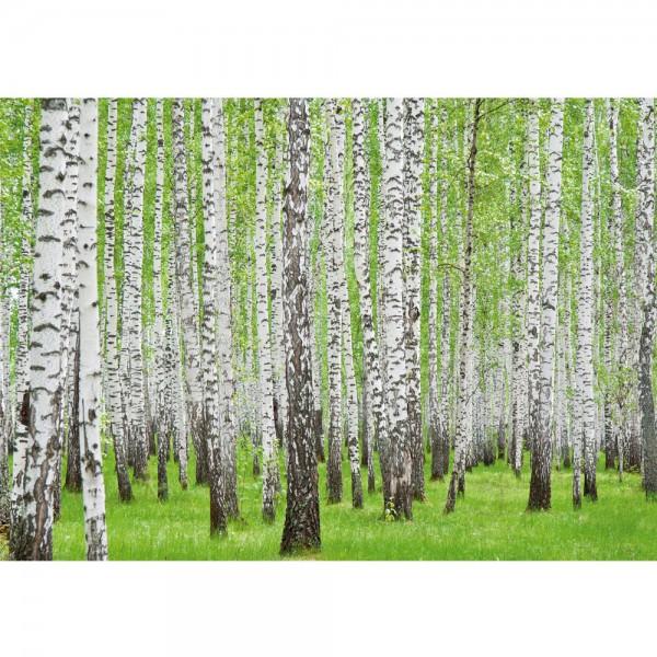 Fototapete Wald Tapete Birke Wald Bäume Natur grün weiß weiß   no. 433