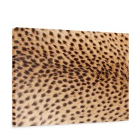 Leinwandbild Leopard Tier Braun Natur | no. 181
