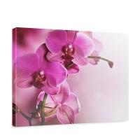 Leinwandbild Pink Orchid Orchidee Blumen Blumenranke Rosa Pink Natur Pflanzen | no. 99