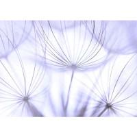 Fototapete Pflanzen Tapete Pusteblume Löwenzahn Weiß Natur grau | no. 207
