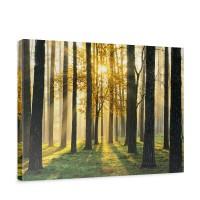 Leinwandbild Sunlight Forest II Wald Bäume Sonnenstrahlen grün Ruhe | no. 62