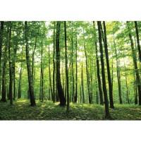 Fototapete Wald Tapete Bäume Wald Sonne Wiese grün | no. 528