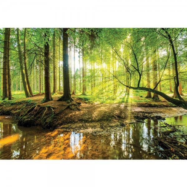 Fototapete Wald Tapete Laubwald, Bach, Sonnenaufgang, Frühling natural | no. 3355