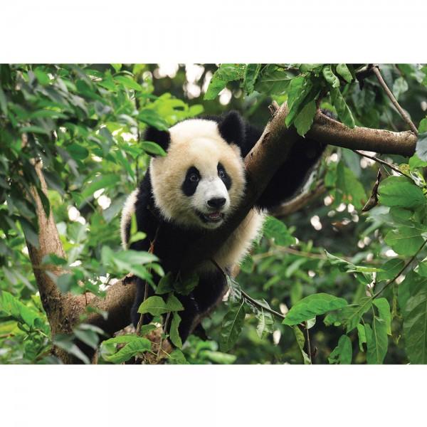 Fototapete Tiere Tapete Tier Panda Bär Baum Fell Kinderzimmer Zoo Dschungel grün | no. 986