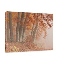 Leinwandbild Wald Bäume Natur Baum Herbst Nebel | no. 255