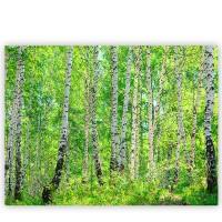 Leinwandbild Birch Forest Birkenwald Bäume Wald SonneBirken Gras Natur Baum   no. 7