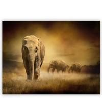 Leinwandbild African Savanna Afrika Savanne Elefant Elefanten Gras Landschaft   no. 11