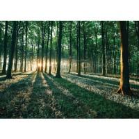 Fototapete Wald Tapete Sonnenuntergang Wald Bäume Wiese grün | no. 641