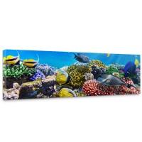 Leinwandbild Underwater Reef Aquarium Unterwasser Meer Fische Riff Korallenriff | no. 105